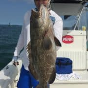 key west grouper